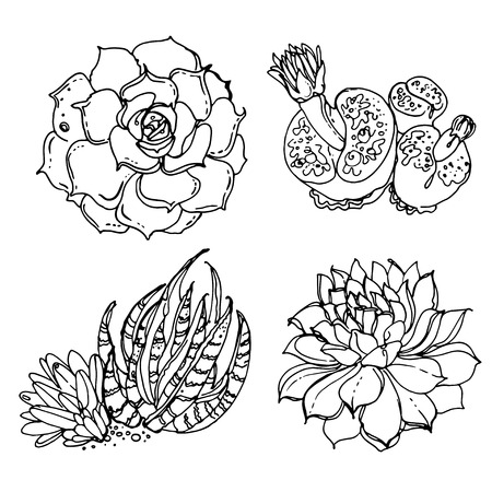 potting soil: Cacti and succulents painted a white line on a white background. Vector sketch of indoor plants.