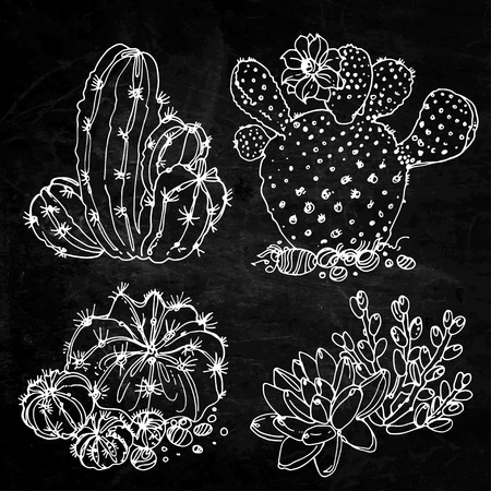 potting soil: Cacti and succulents painted a white line on a black background. Vector sketch of indoor plants. Chalkboard texture background Illustration