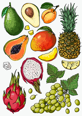 Pineapple, avocado, papaya, apricot, mango, grape, pitahaya line