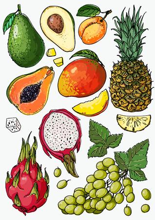 Pineapple, avocado, papaya, apricot, mango, grape, pitahaya line