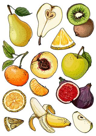 Set of fruits drawn a line on a white background vector sketch. Sketch line, apple, pear, peach, lemon, orange, lime, tangerine, kiwi, figs, banana.