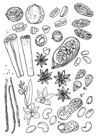 Noten en kruiden lijn getekend op een witte achtergrond. Schets van voedsel. Walnoot, cacaobonen, vanille, gorica, amandelen, hazelnoten, pinda's, anijs.