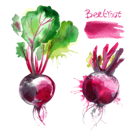 Beet painted with watercolors on white background