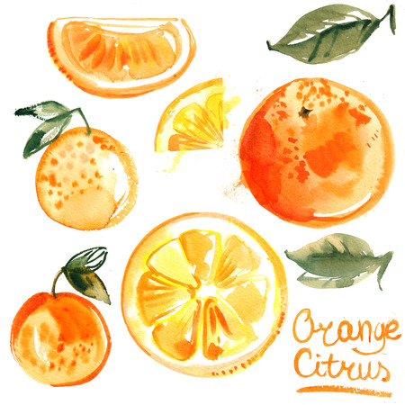 Set of oranges painted with watercolors on white background