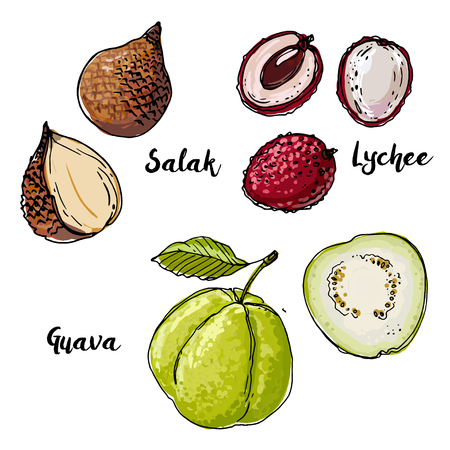 Salak, Lychee, Guava. Fruits drawn by a line on a white backgrou