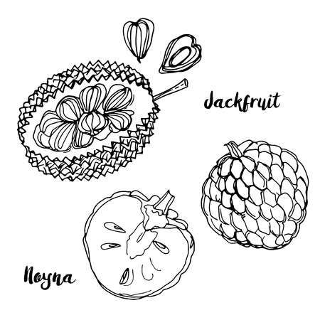 Fruits drawn by a line on a white background Stockfoto - 102055271