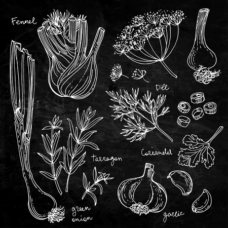 Herb drawn white lines on a black background Illustration