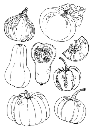 Pumpkins line drawn on a white background