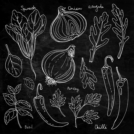 Herbs. Spices. Italian herb drawn white lines on a black background. Vector illustration. Basil, chilli, onion, parsley, spinach, arugula