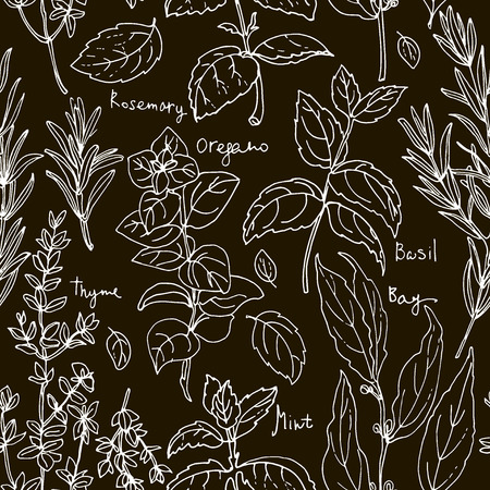 Pattern of herbs. Spices. Italian herb drawn white lines on a black background. Vector illustration. Basil, Parsley, Rosemary, Sage, Bay, Thyme, Oregano, Mint