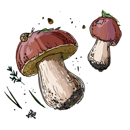 Edible mushrooms. Porcini. A sketch of food drawn by a black line. Colorful drawing of food. 向量圖像