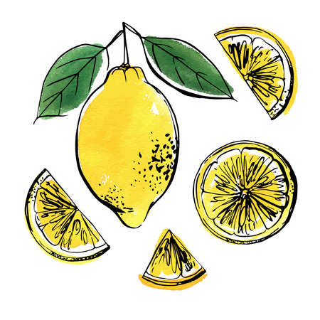 Lemons black line drawn on a white background. Color vector drawing of fruits. Citrus