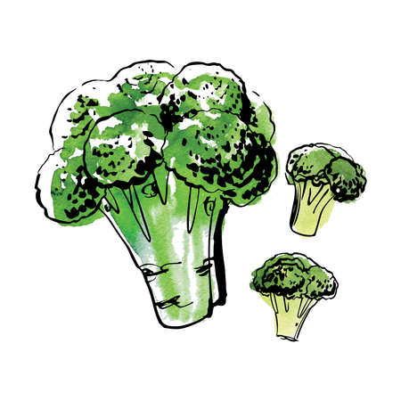 Sketch of food vegetables by line and watercolor. Broccoli