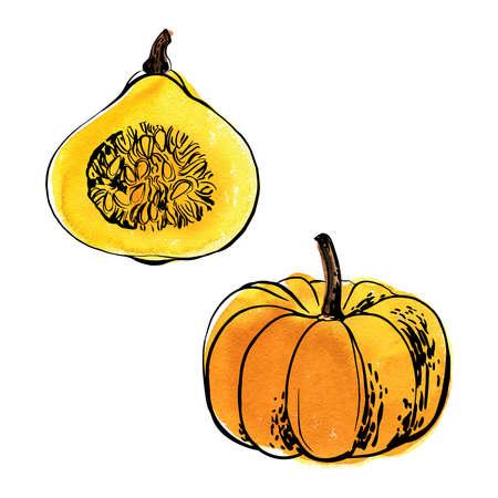 Sketch of food vegetables by line and watercolor. Orange pumpkin Çizim