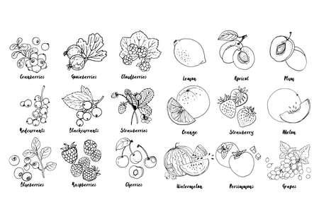 Set of fruits, berries and leavesdrawn a line on a white background. Vector sketch. Sketch line. Lemon, apricot, plum, orange, strawberry, melon, watermelon, persimmons, grapes, blackcurrants Ilustração