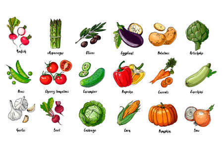 Set of drawn colored vegetables. Fresh harvest. Farm products. Pumpkin, asparagus, olives, peas, cherry tomatoes, cucumber, garlic, beets, cabbage, Eggplant, potatoes, artichokes, peppers, carrots Vetores