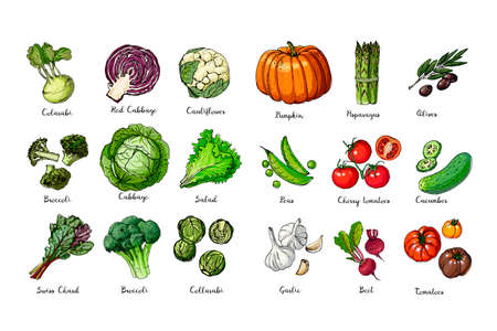 Set of colored vegetables. Fresh food. Pumpkin, tomato, cabbage, lettuce, asparagus sprouts line drawn on a white background. Vector illustration.
