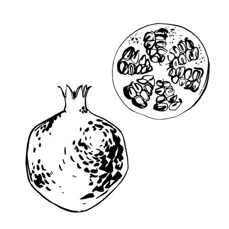 Pomegranate. Fruit Vector sketch of food in ink on a white background.