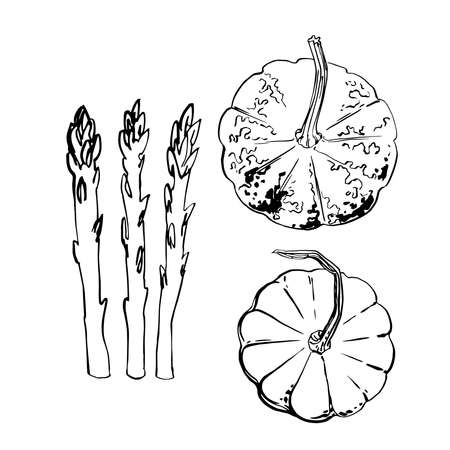 Pumpkins, asparagus. Vegetables. Ink sketch of food by line on white background.