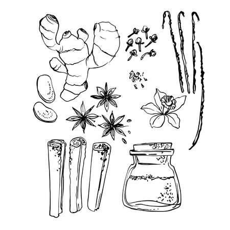 Spice. Ginger, anise, cloves, cinnamon, vanilla. Vector sketch of food in ink on a white background.
