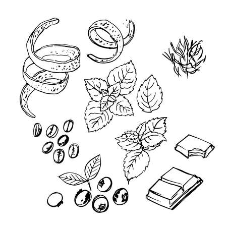 Spice. Orange zest, mint, chocolate, coffee, blueberries. Vector sketch of food in ink on a white background.