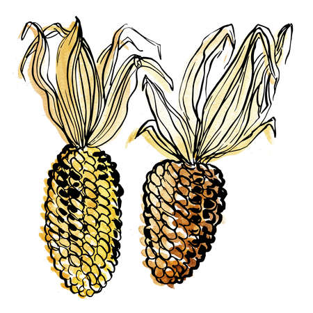 Corn Vegetables. Ink sketch of food by line on white background.