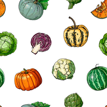 The pattern of painted colored vegetables line drawn on a white background. Skertch autumn harvest. 矢量图像