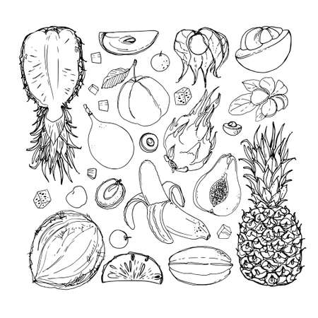 Flying exotic fruits on a white background. A sketch of food. Coconut, Physalis, mangosteen, pineapple, banana, jackfruit Stock Illustratie