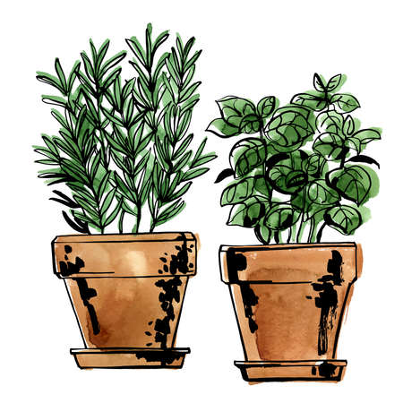 Italian herbs in a pot. Rosemary and basil. Sketch of food by line and watercolor.