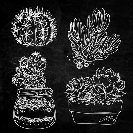 Cacti and succulents painted a white line on a black background. Vector sketch of indoor plants. Chalkboard texture background 矢量图像