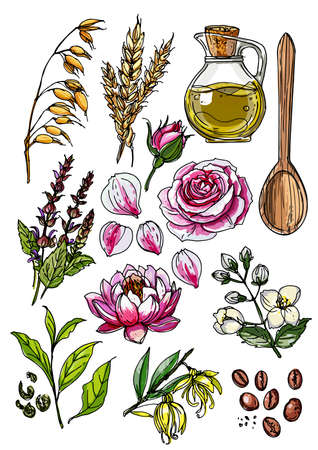 Natural cosmetics and medicine. A set of herbs and flowers painted black line on a white background. Vector sketch of botany.