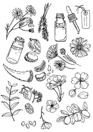 Natural cosmetics and medicine. A set of herbs and flowers painted black line on a white background.