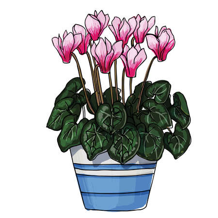 ? yclamen. Flowers in a pot. Sketch of houseplant line on a white background. 矢量图像
