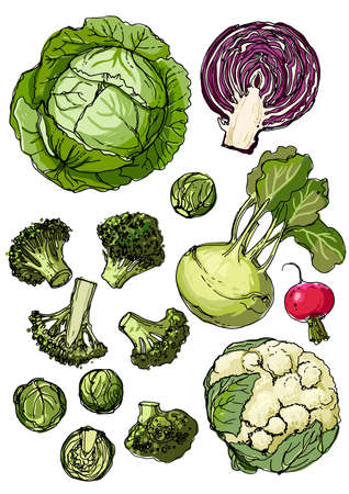 Set of vegetables. Fresh food. Pumpkins line drawn on a white background. Vector illustration. Coloring for adults