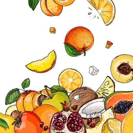 Fresh food. Watermelon, cantaloupe, pomegranate, apricot, persimmon line drawn on a white background. Vector illustration.
