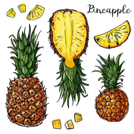 Pineapple, mini-pineapple Phuket. Fruits drawn by a line on a white background. Fruits from Thailand. Food sketch lines.