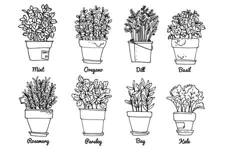 Line sketch of flowers in pots, home decor. Drawing vector black. Italian herbs and spices in pots. Rosemary, mint, basil, oregano.
