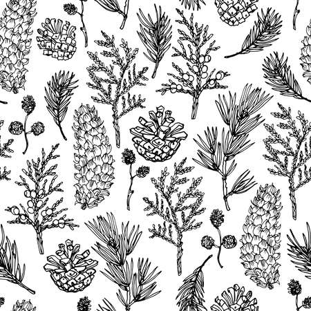 Pattern Vector line drawing. Christmas tree branches and cones drawn by a black line on a white background. Vetores