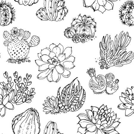Pattern Cacti and succulents, indoor flowers in pots. Home decor. Vector line sketch