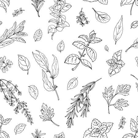 Pattern color herbs. Spices. Italian herb drawn black lines on a white background. Vector illustration. Vektorgrafik