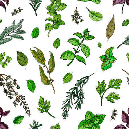 Pattern color herbs. Spices. Italian herb drawn black lines on a white background. Vector illustration.