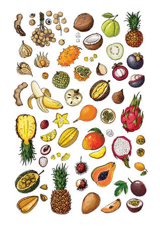 Vegetables and fruits food vector poster. Color sketch of products. Decor for kitchen and restaurant. Exotic fruits and berries