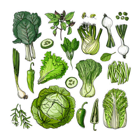 Green. Vector food. Colored vegetables and fruits on a white background. Cabbage, onion, lettuce, herbs, cucumber, fennel