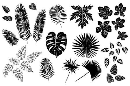 Exotic tropical leaves of plants and flowers. Black vector silhouettes on a white background. Monstera, Ferns, palm
