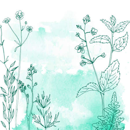 Flowers and herbs line on watercolor background color 向量圖像
