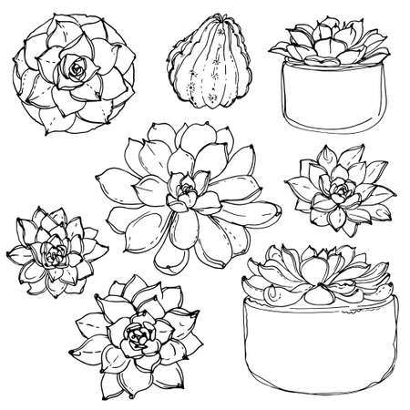 Succulents. Cacti line drawn on a white background. Flowers in the desert. Vektoryny drawing succulents. Vintage