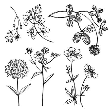 Herbs and flowers vector line drawing.
