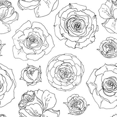 Flower pattern Roses. Ornament drawn by a black line vector on a white