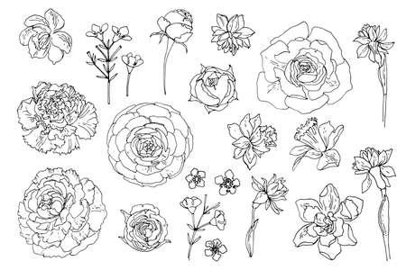 Flowers line drawn on a white background. Vector sketch of flowers. Roses, Daffodils