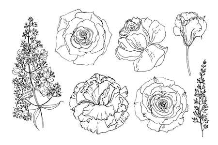 Flowers line drawn on a white background. Vector sketch of flowers. Lisianthus, Eustoma, Roses, Hydrangea panicle 矢量图像